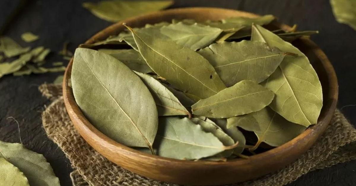 Propiedades y beneficios de las hojas de laurel