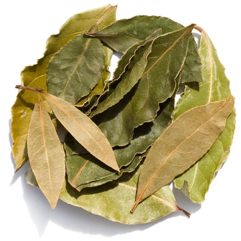 Propiedades y beneficios de las hojas de laurel, aplicaciones medicinales y terapéuticas
