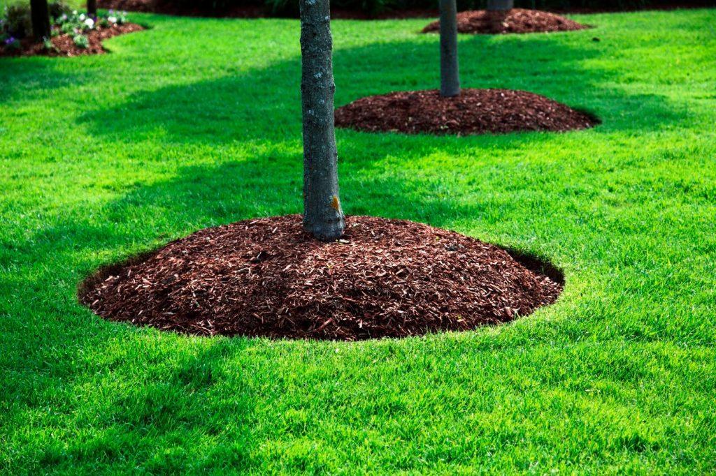 Fertilizantes naturales, hojas, muching